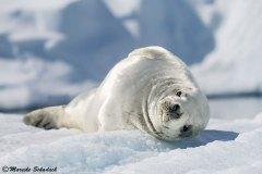 antarctic-peninsula_03