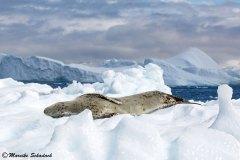 antarctic-peninsula_04