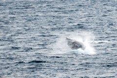 neumayer-channel-antarctic_02