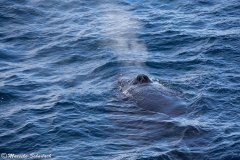 neumayer-channel-antarctic_03