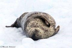 neumayer-channel-antarctic_11