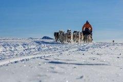 Mit dem Hundeschlitten nach Tiniteqilaaq