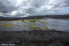 Islands Landschaften überraschen mit knallgrünem Moos.
