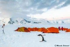 Gentoo penguin, Damoy Point, Antarctica