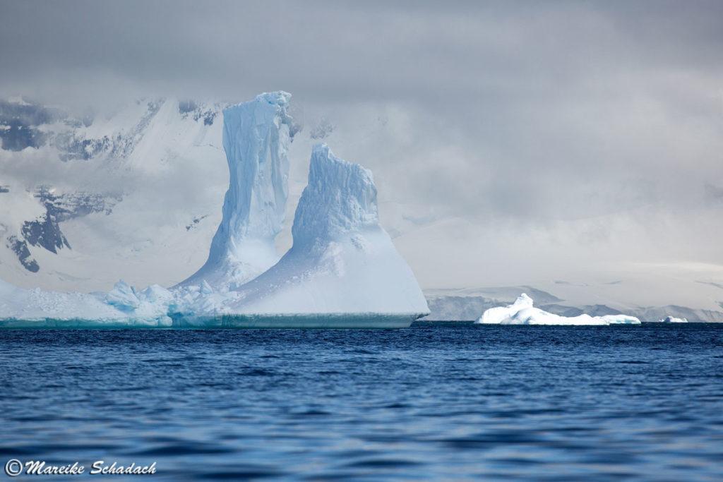 Eisberge bei Cuverville Island