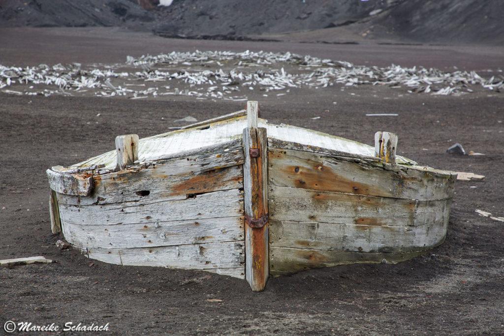 Holzwrack in der Whaler's Bay, Depecetion Island