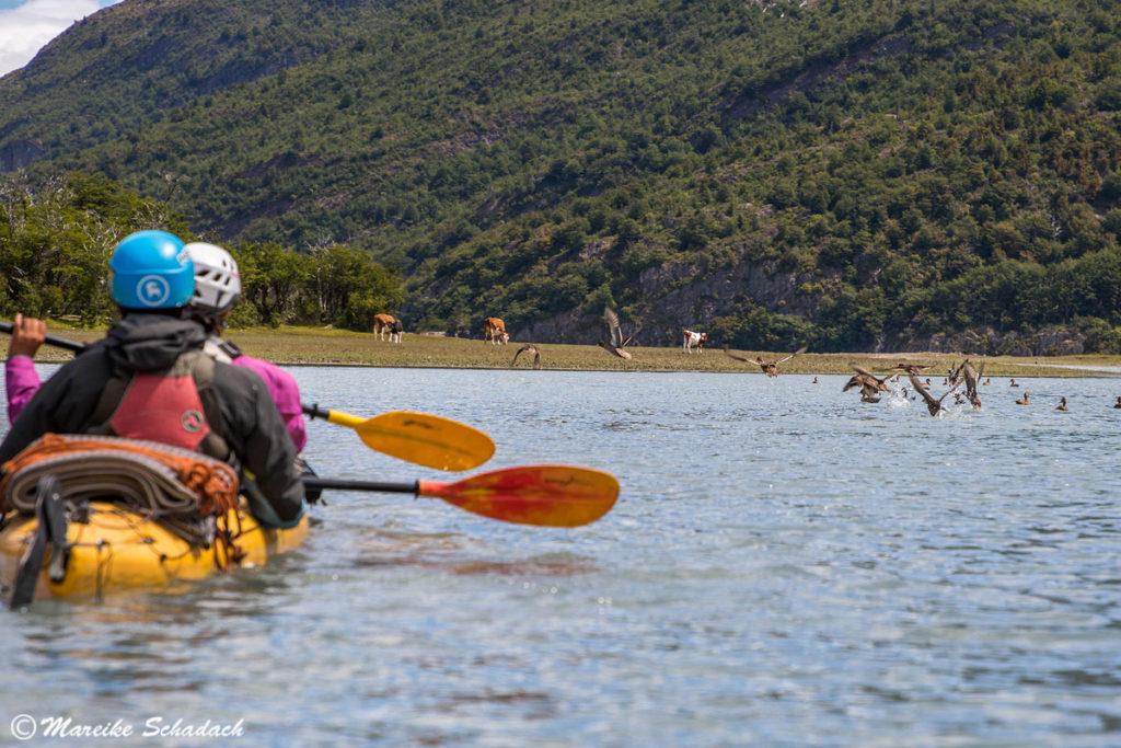 Wildlife während unserer Kajaktour in Patagonien