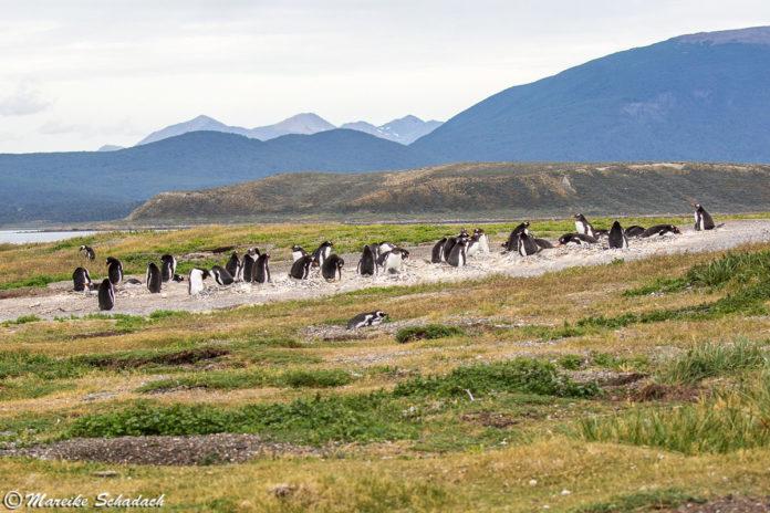 Highlights im Beagle-Kanal - Pinguine, Seelöwen und mehr