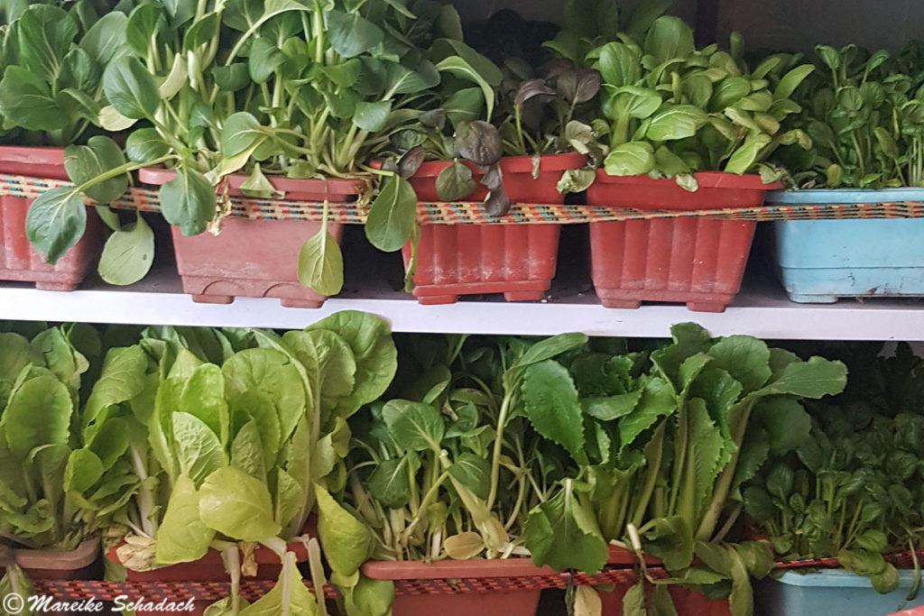 Gemüse in der Lhasabahn