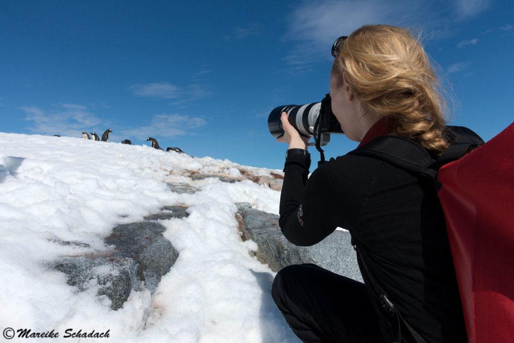 Tipps für Pinguinfotos - Teleobjektiv mitnehmen. Damoy Point, Antarktis