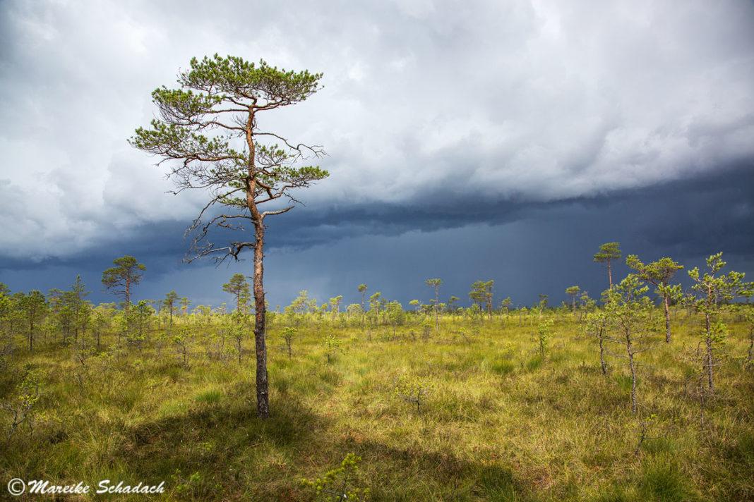 Ab ins Moor! – Tipps für euren Besuch im Soomaa-Nationalpark