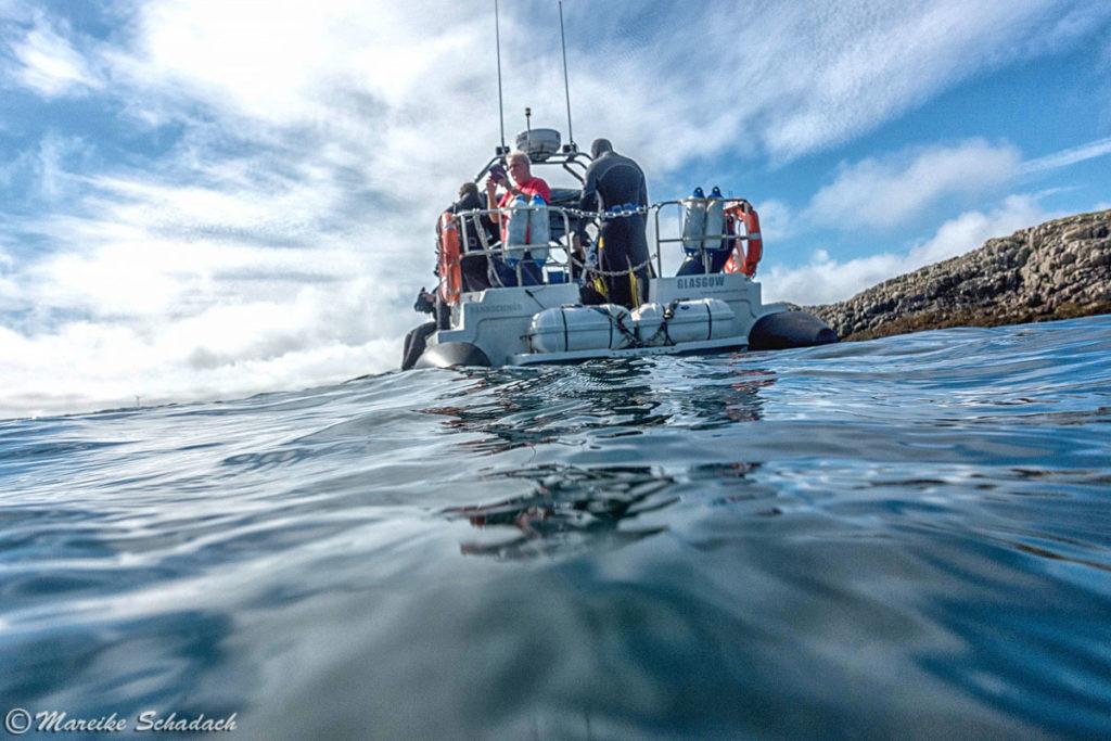 """Schnorchelboot von """"Basking Shark Scotland"""""""