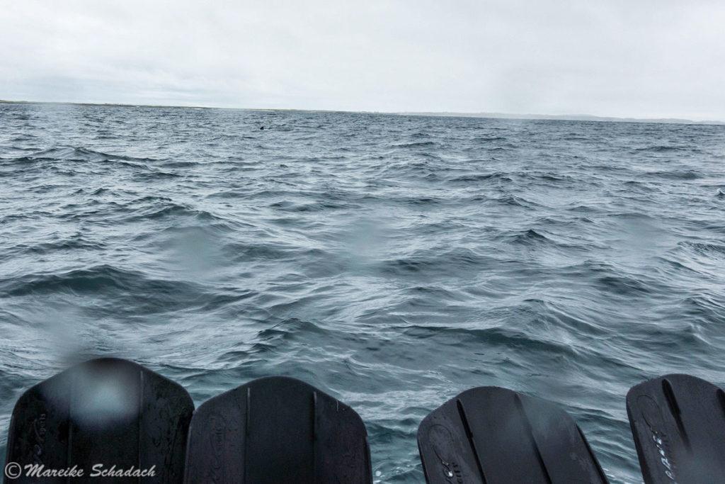 Warten auf den Riesenhai, Isle of Coll, Schottland
