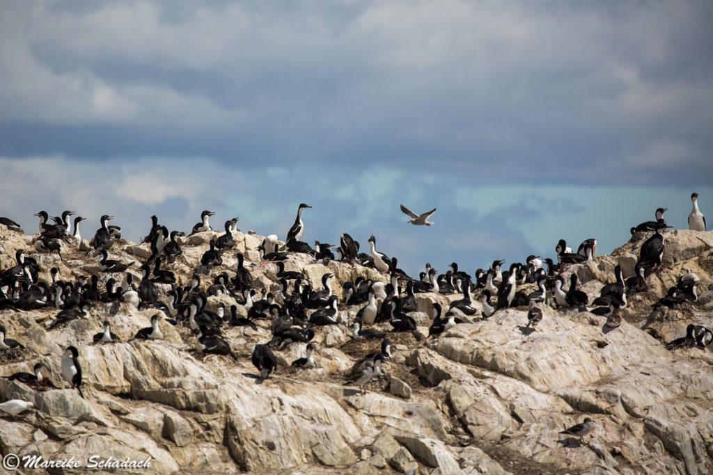 Isla de los Pájaros (Vogelinsel)