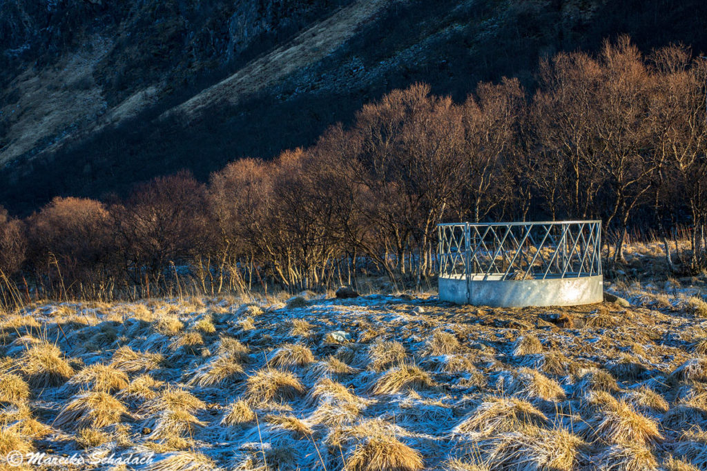 Futterraufe im Morgenlicht, Vesterålen in Norwegen
