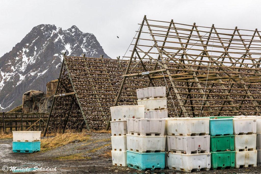 Fischgestelle auf Kieøya bei Svolvær sind ein Highlight der Lofoten im Winter