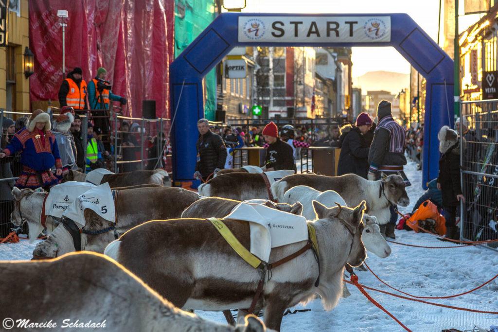 Start des Rentierwettrennens, Winter Tromsø