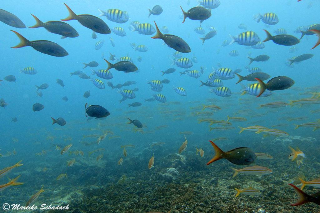 """Ein Highlight von La Paz: Tauchen in der """"Fischsuppe"""" der Baja California"""