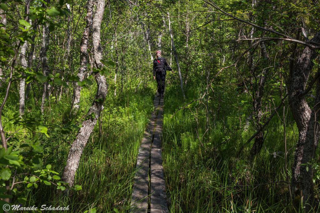 ökologischer Pfad zum Beluga Kap, Groß-Solowezki, Russland