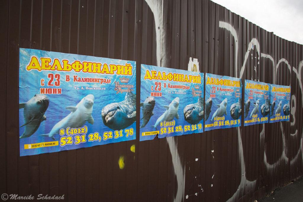 Leider gibt es immer noch Delfinarien. Hier Werbung in Kaliningrad, Russland