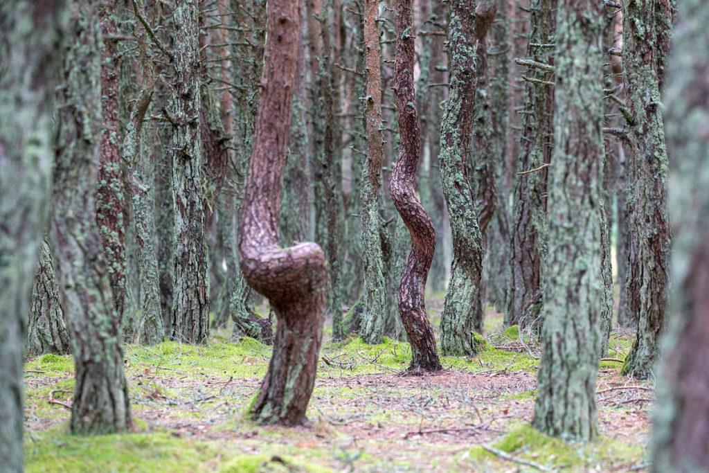 Der Dancing Forest war eines der Highlights unseres Roadtrips im Baltikum.