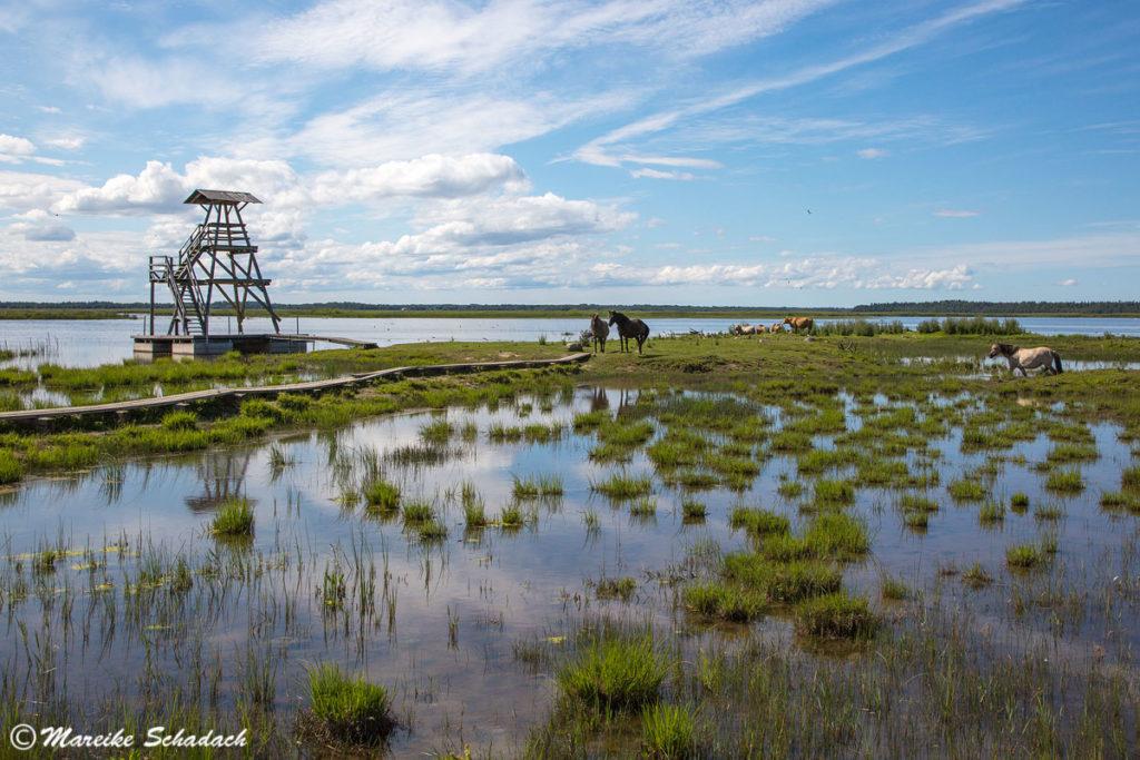Eines der Highlights unseres Baltikum Roadtrips war das Naturschutzgebiet Engures Ezers