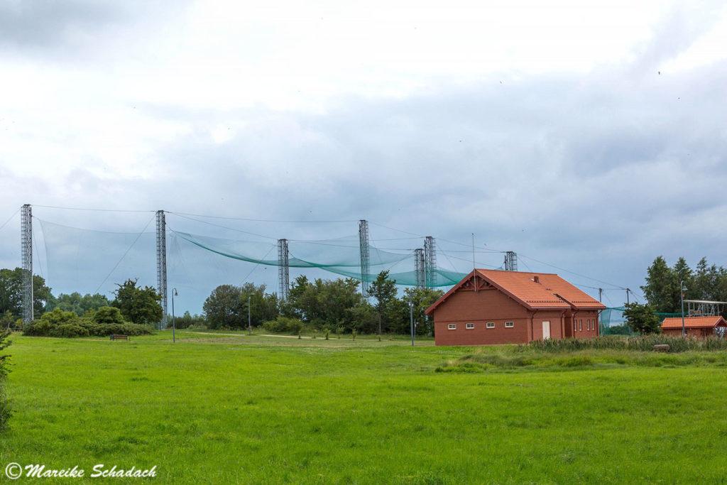 Die Besichtigung der Vogelberingungsstation war für mich eines der Highlights unseres Roadtrips im Baltikum.