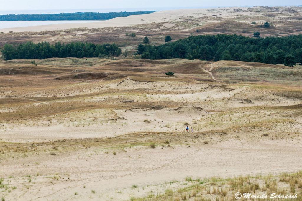 Die Parnidis-Düne bei Nida zählte ebenfalls zu den Highlights unseres Roadtrips im Baltikum.