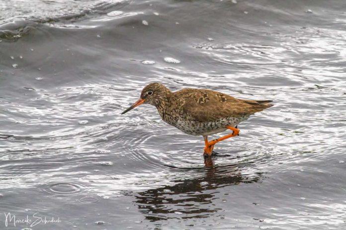 Mývatn - Wandern und Birdwatching an Islands Mückensee