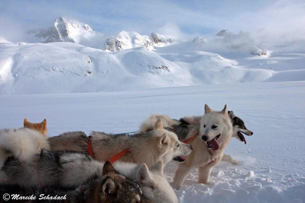 Hundeschlitten von Tasiilaq nach Tiniteqilaaq