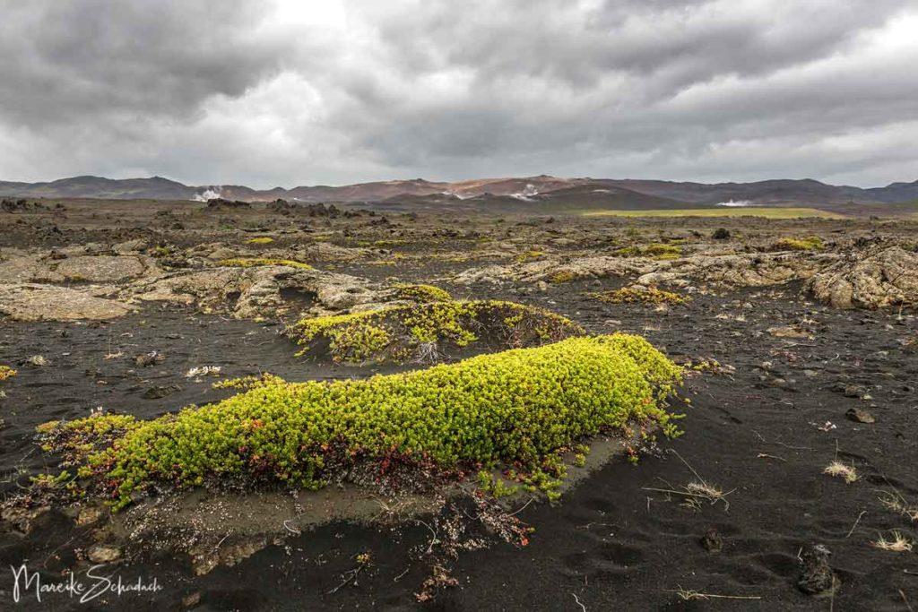 Wandern über das Lavafeld Vogahraun am Ostufer des Mývatn