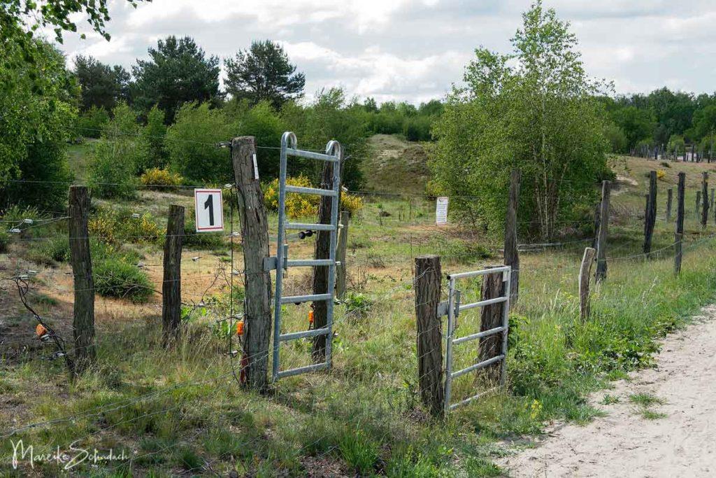 Ausflug Döberitzer Heide - Zaunanlagen um die Wildniszone auf dem ehemaligen Truppenübungsplatz