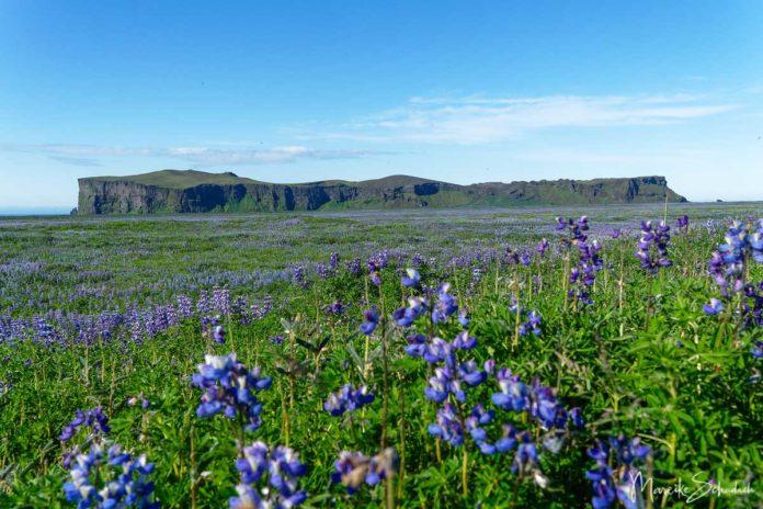 Aussichtsreiche Wanderung auf den Hjörleifshöfði im Süden von Island
