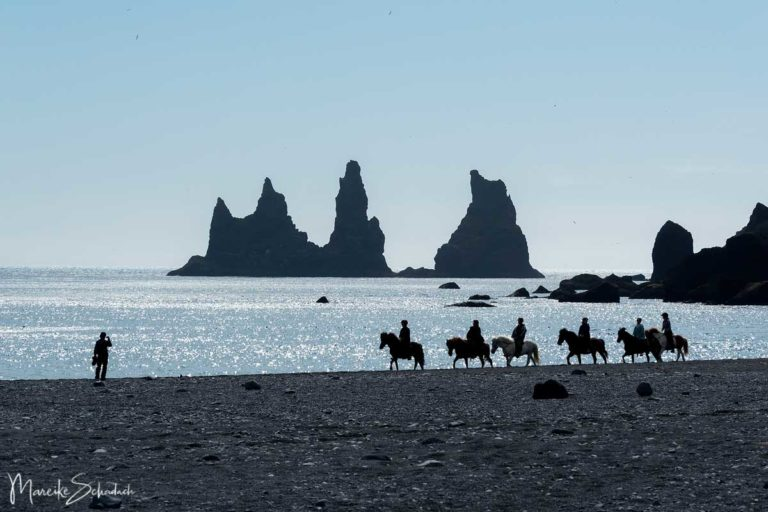 Warum ihr auf Island ein Islandpferd reiten solltet