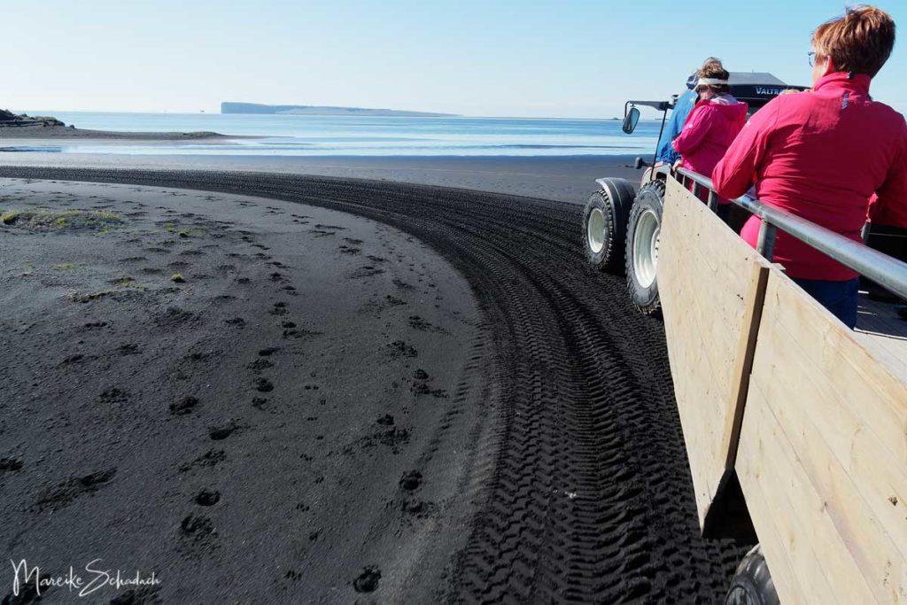 Trecker fährt über den schwarzen Sand zu den Puffins (Papageientauchern) bei Ingólfshöfði - Island