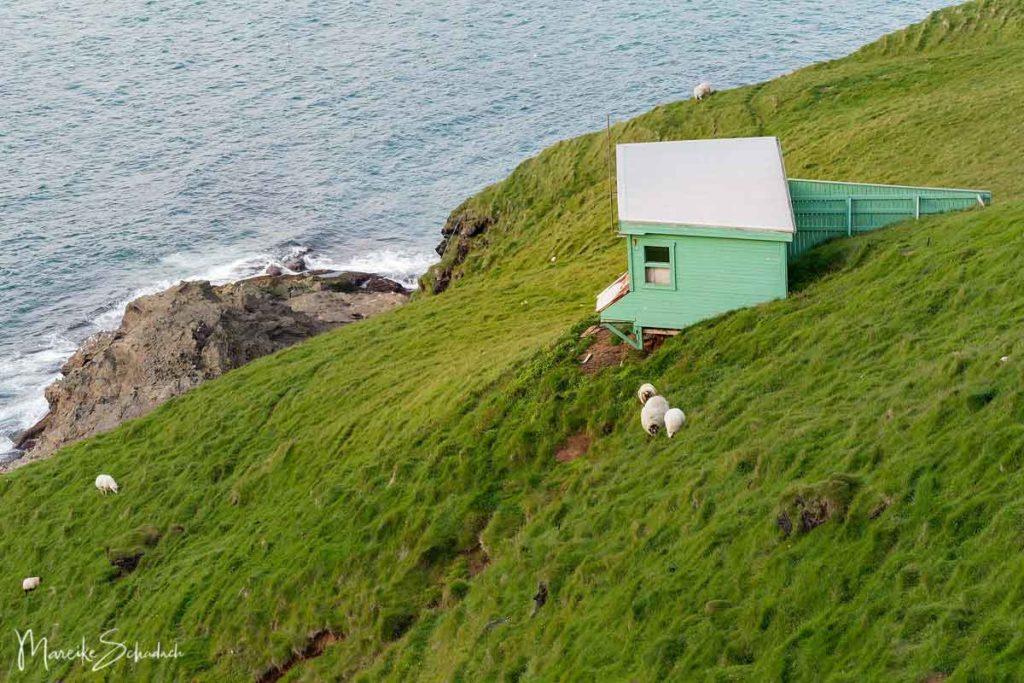 Puffin / Papageientaucher Beobachtungshütte auf den Westmännerinseln