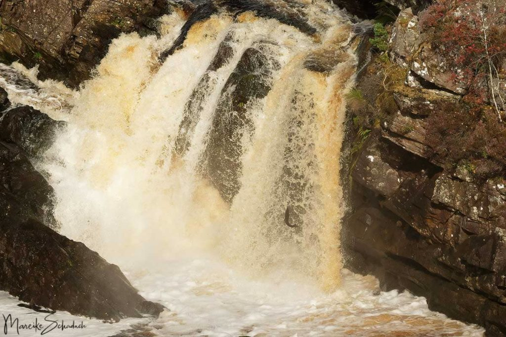 Leaping salmon Rogie Falls - North Coast 500 – Roadtrip in Schottland