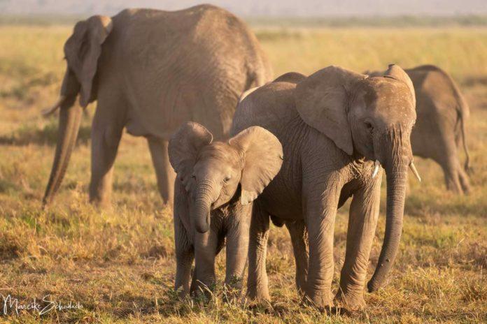 Amboseli Nationalpark - Safari mit Elefantengarantie