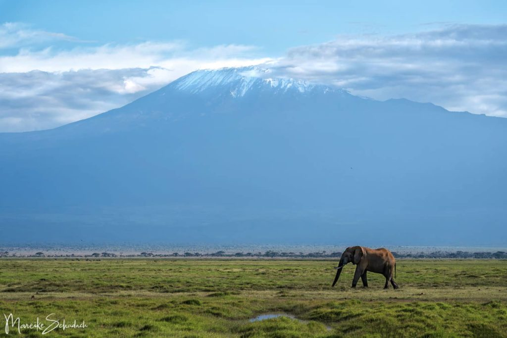 Blick auf den Kilimandscharo bei Safari im Amboseli Nationalpark