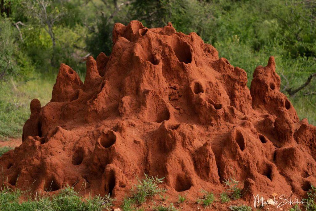 Ameisenburg Tsavo National Park Kenia