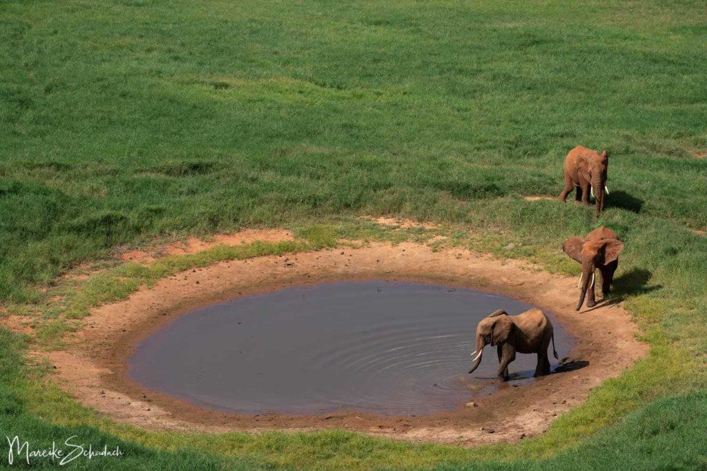 Elefanten Wasserstelle Voi Safari Lodge Tsavo Kenia