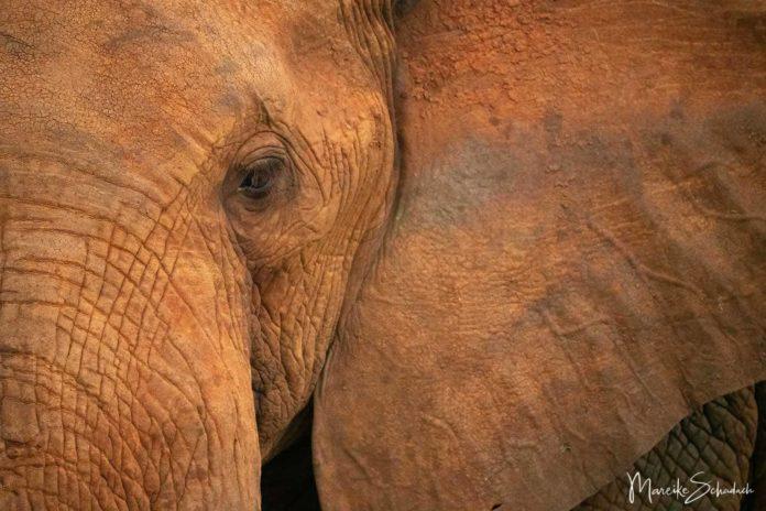 Tsavo Nationalpark - das Reich der Roten Elefanten
