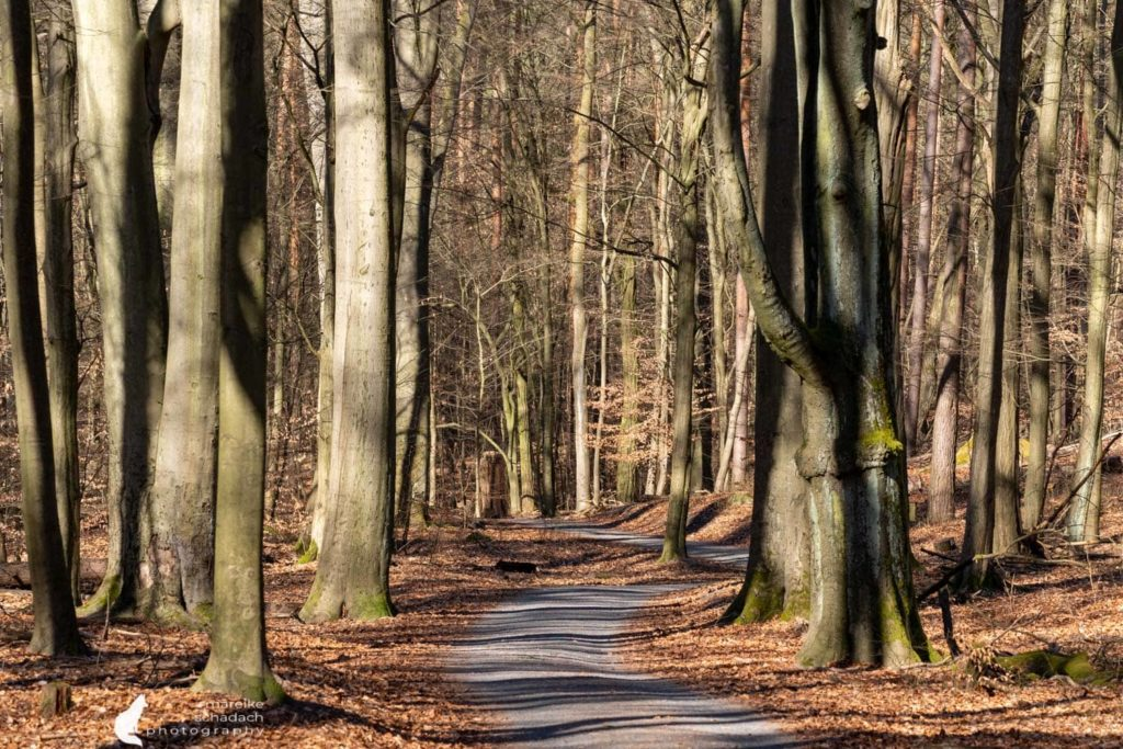 Wanderwege im Tegeler Forst