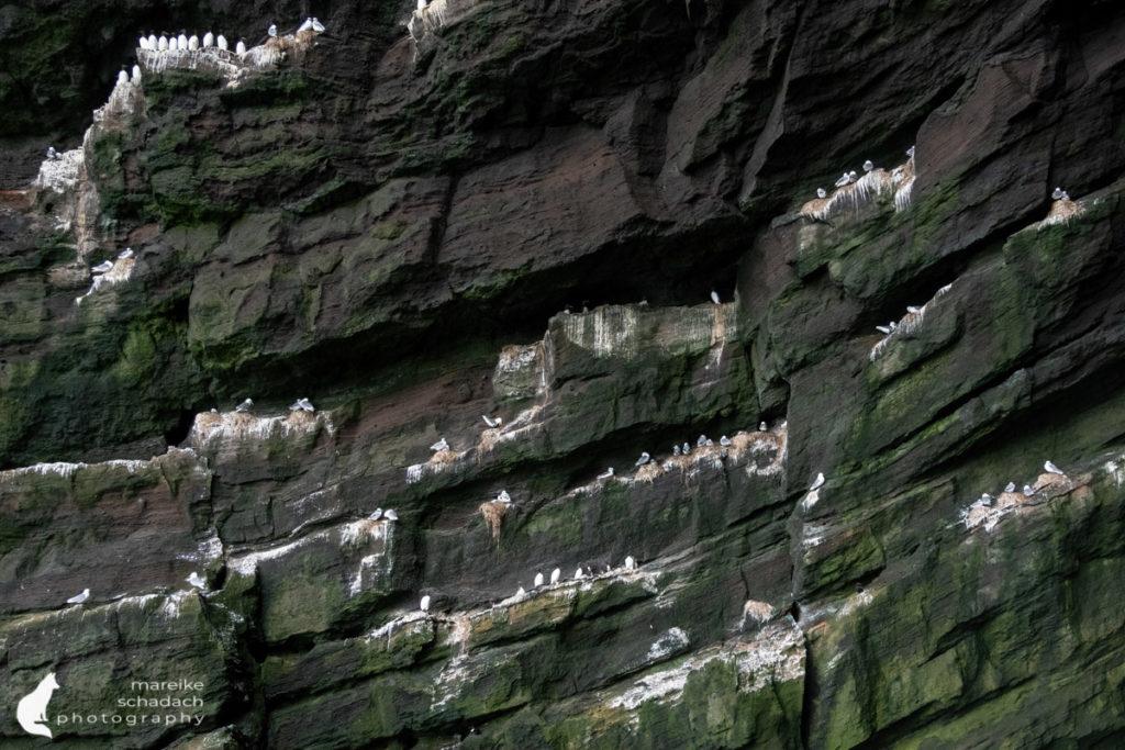 Vogelfelsen während einer Bootstour um die Westmännerinsel Heimaey