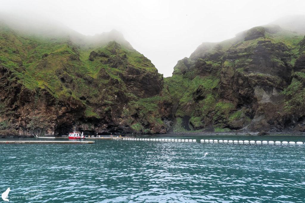 Belugawal Sanctuary Klettsvik Bay während einer Bootstour um die Westmännerinsel Heimaey