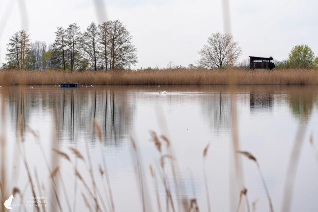Teichlandschaft und Birdwatching Turm Linum