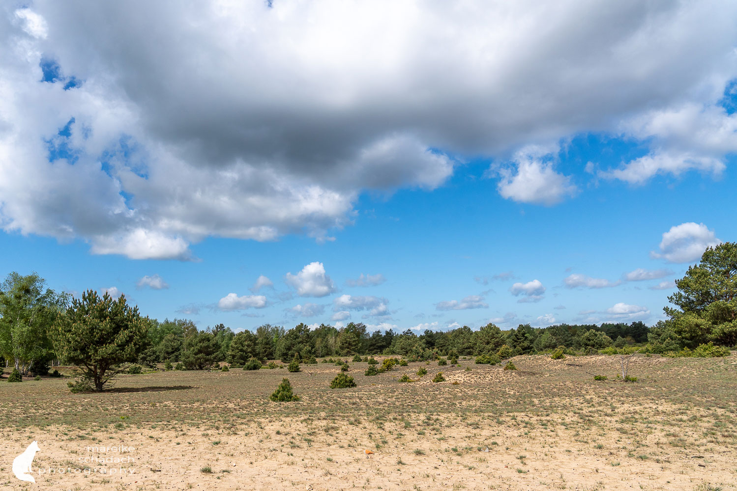 Schönower Heide Sand