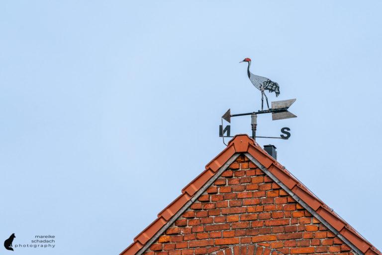 Storchendorf Linum - Störche, Kraniche und andere Vögel beobachten