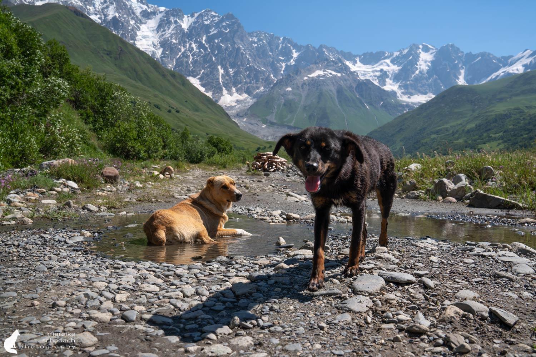 Traildogs Georgia